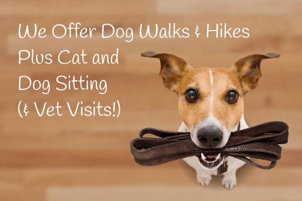 Paw-destrian Dog Walking Dog Hikes 2