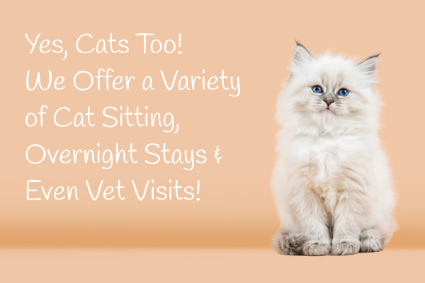 Paw-destrian Cat Visits Mobile