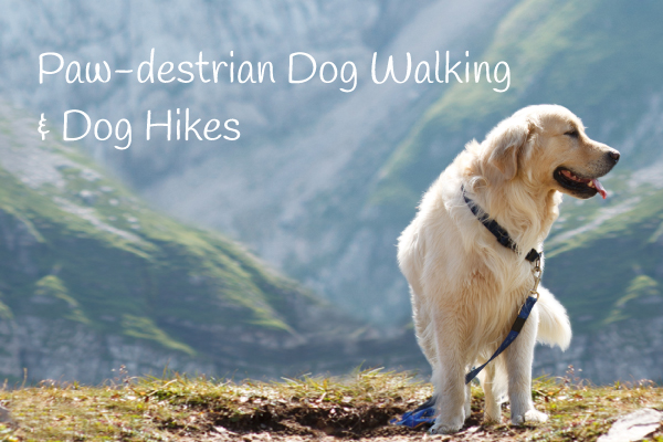 Paw-destrian Dog Walking Dog Hikes